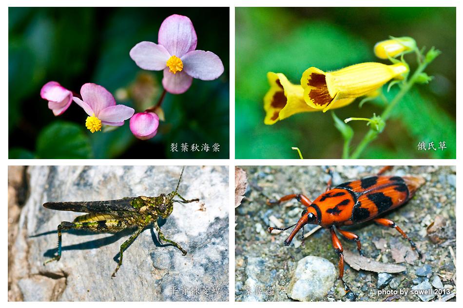 昆蟲生態-4.jpg