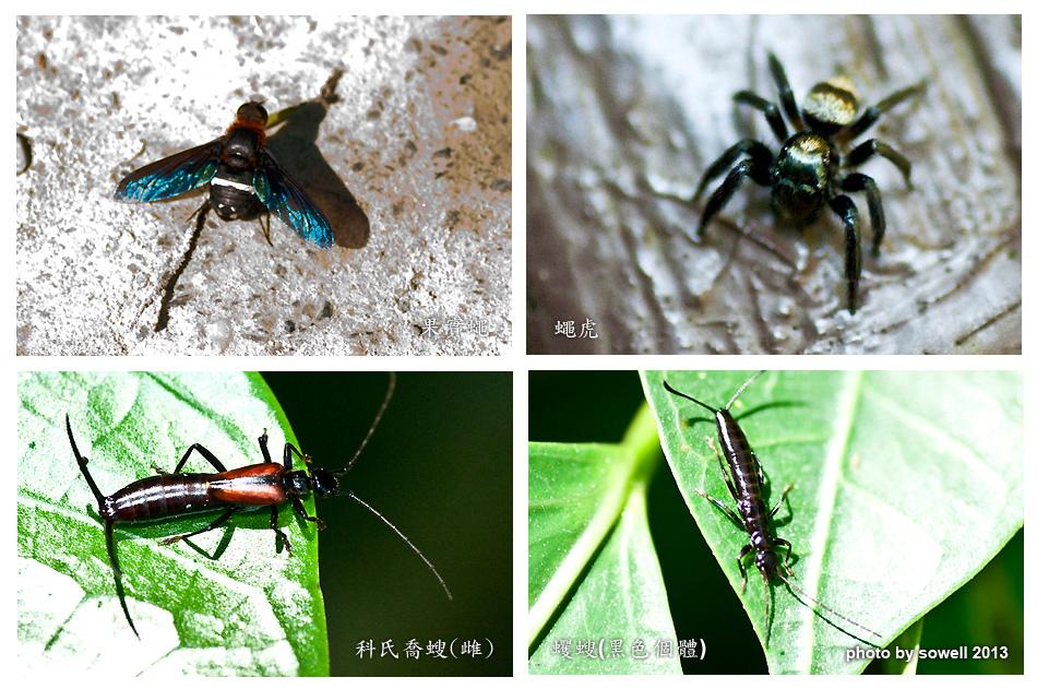 昆蟲生態-5.jpg