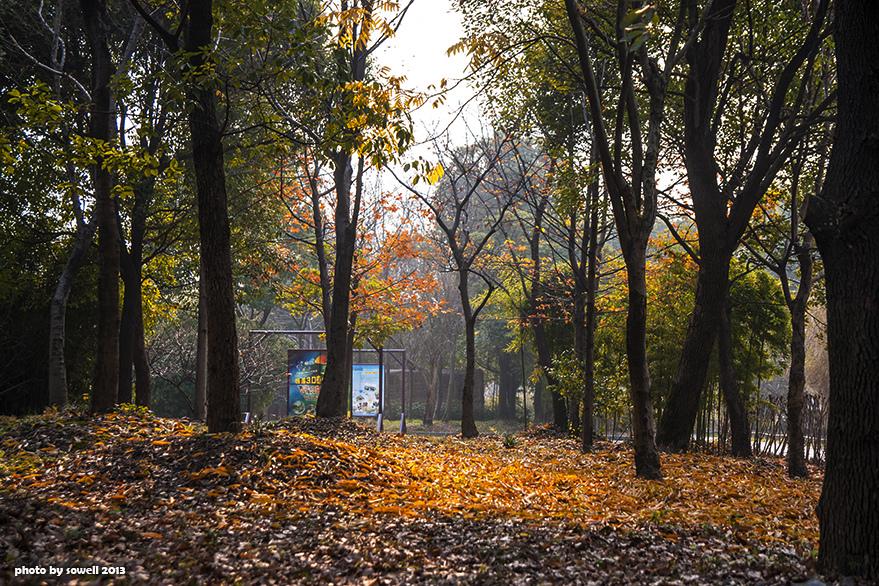 西溪濕地公園