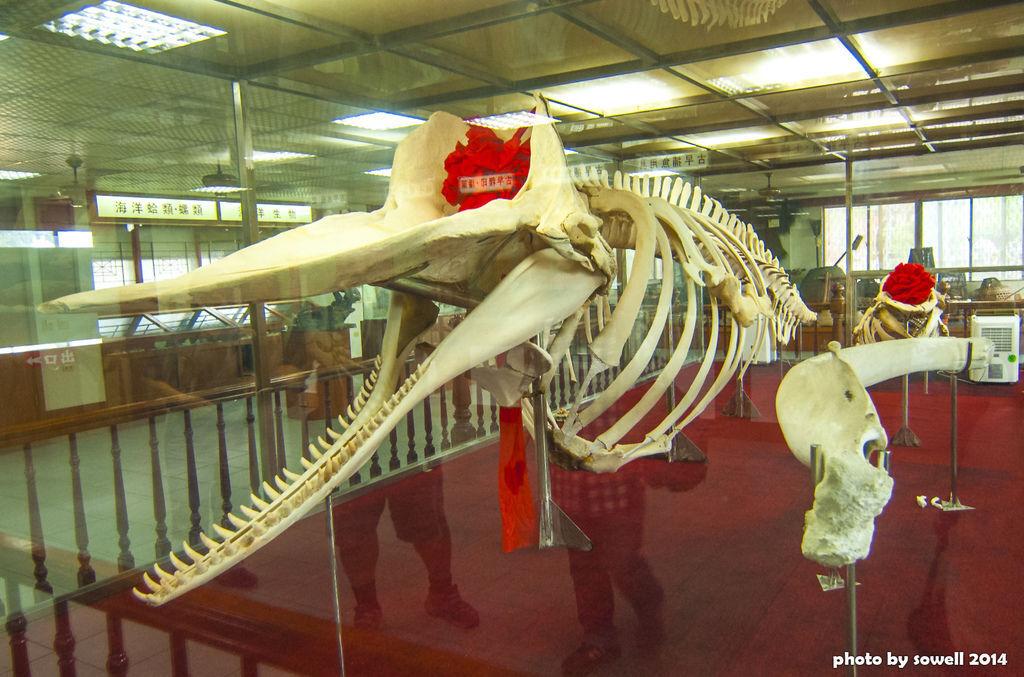 四草鯨魚博物館