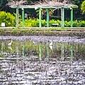 植物園荷花池冬景