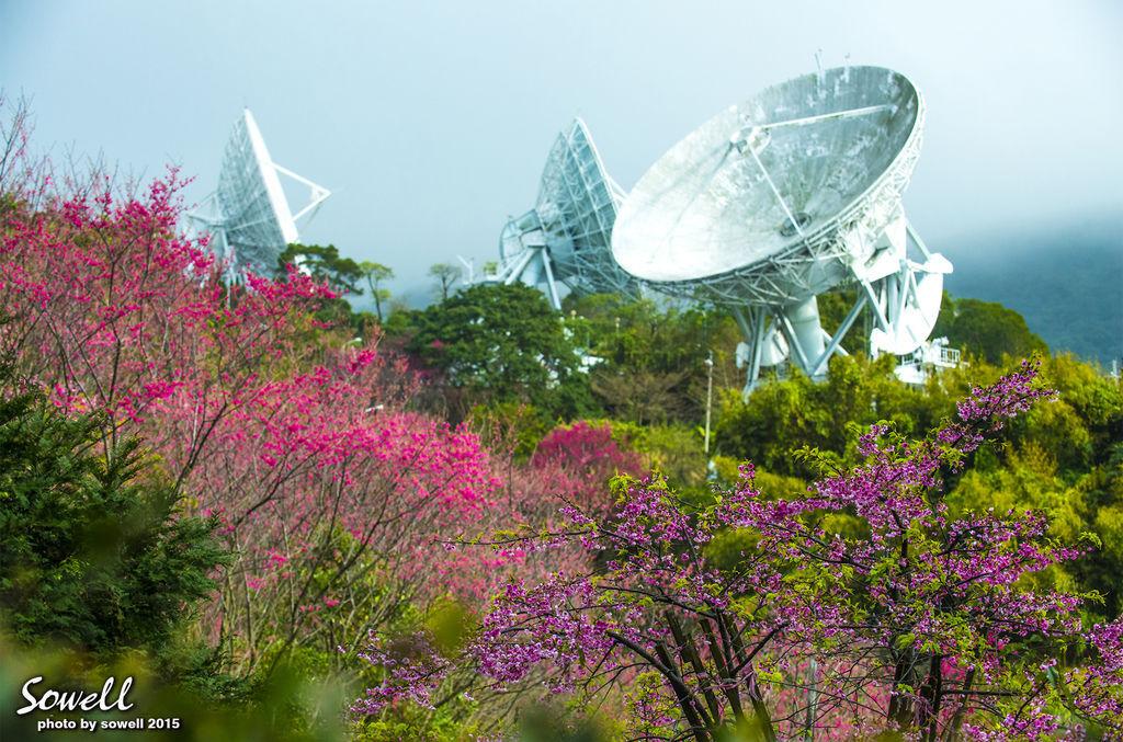 衛星電台櫻花-1