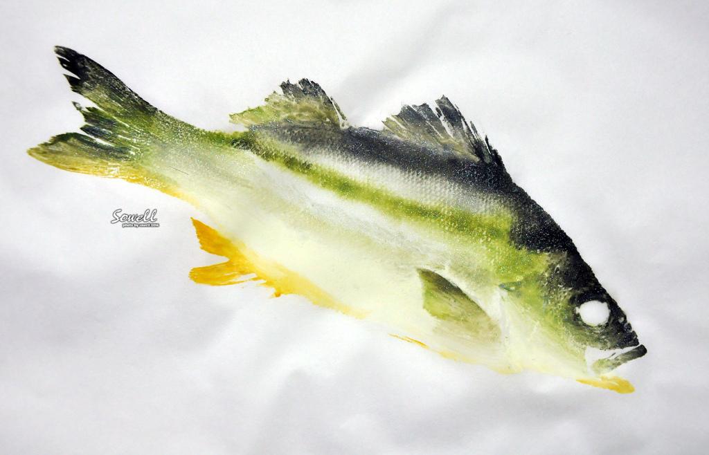花身雞魚魚拓示範(嚴尚文)