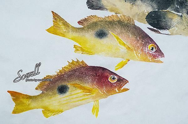 黑點笛鯛魚拓(單斑笛鯛).jpg