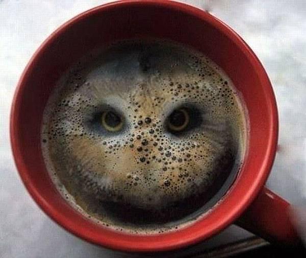 貓頭鷹拉花咖啡
