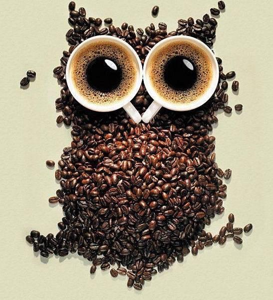 咖啡貓頭鷹