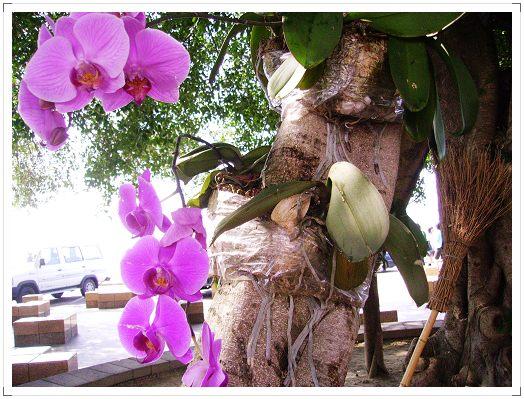 很怪的樹+蘭花??