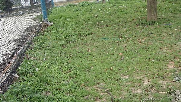 外面的草地