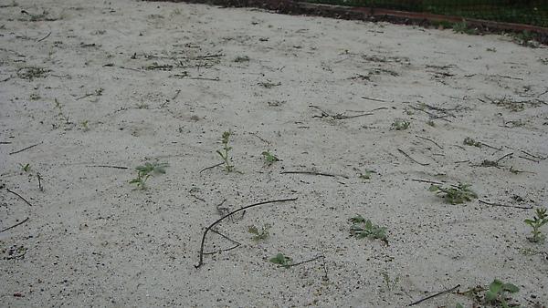 滿地都是雜草呀~~