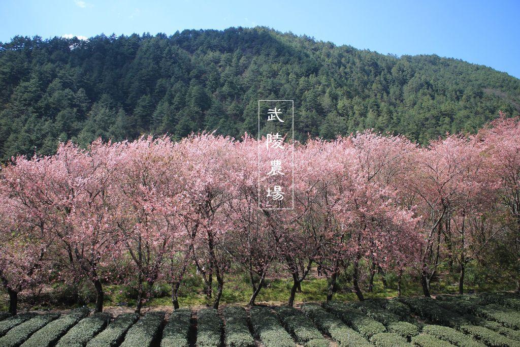 武陵農場cover.JPG