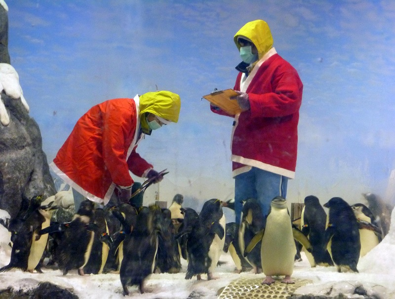 nEO_IMG_海生館耶誕老公公與企鵝 (4)