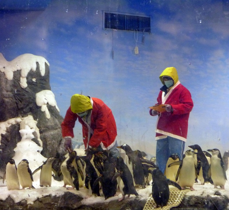 nEO_IMG_海生館耶誕老公公與企鵝 (3)