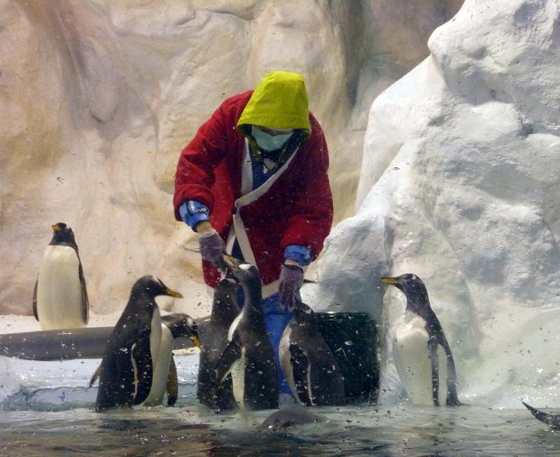 nEO_IMG_海生館耶誕老公公與企鵝 (5)