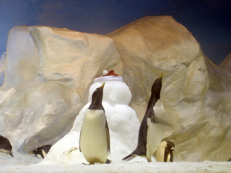 nEO_IMG_海生館企鵝與雪人-2