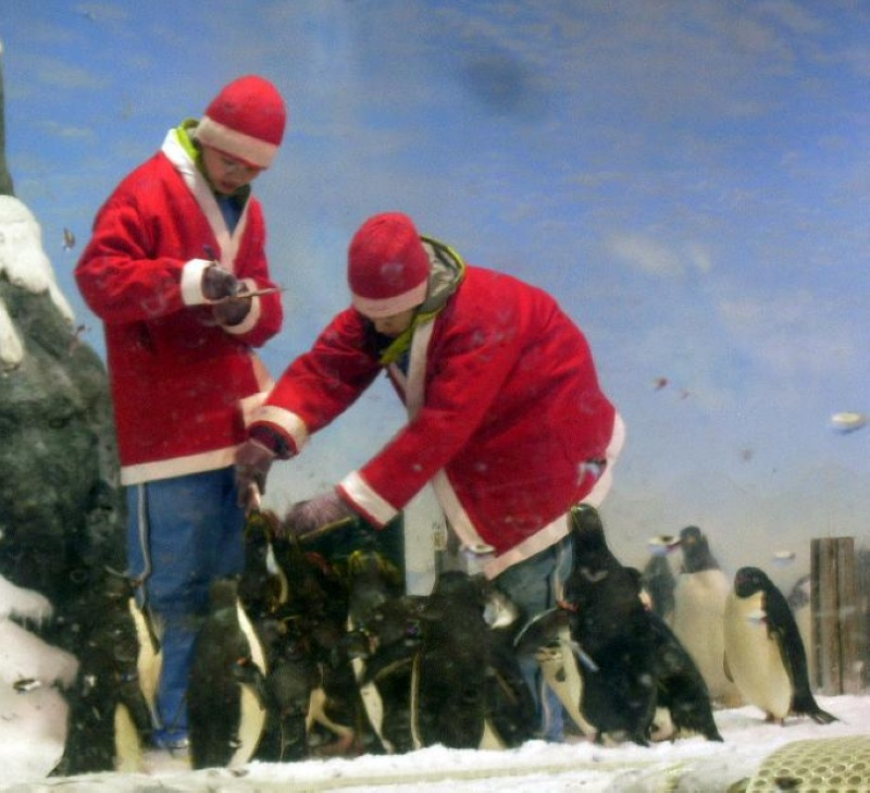 nEO_IMG_海生館耶誕老公公與企鵝(1)