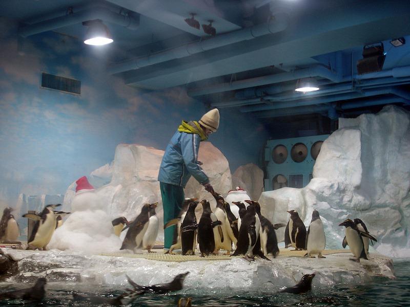nEO_IMG_海生館企鵝餵食-1