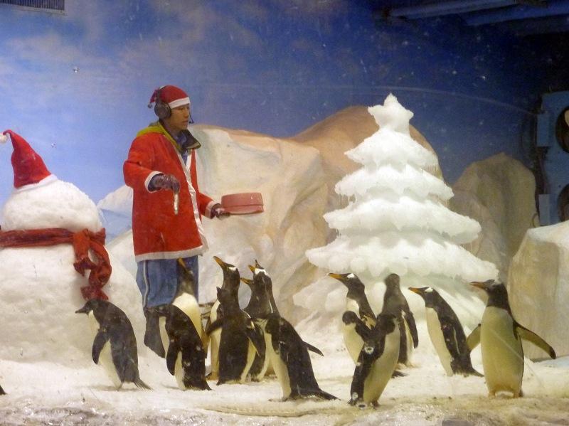nEO_IMG_海生館耶誕老公公與企鵝 (2)