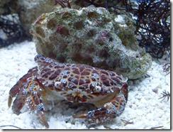銅鑄熟若蟹-1