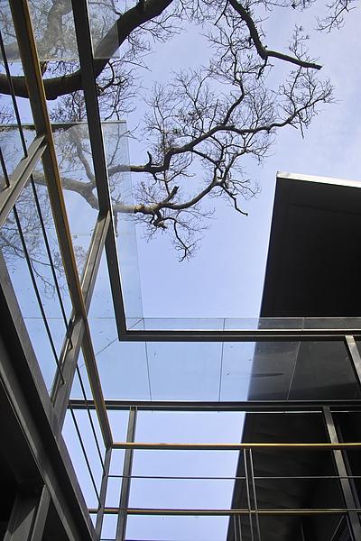 平鎮綠風草原餐廳+枯樹.jpg