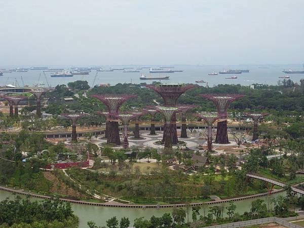 新加坡濱海灣花園【盜攝版】 (13)