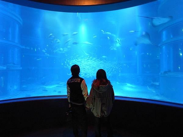 日本大阪市海遊館 (16)