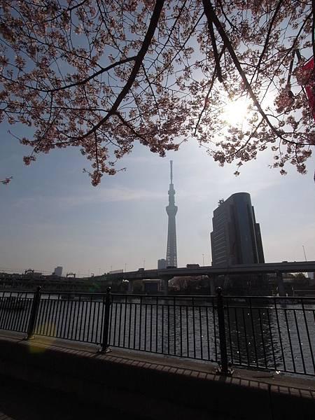 日本東京都隅田川散策 (1)