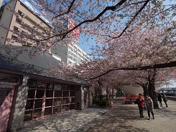 日本東京都隅田川散策 (3)