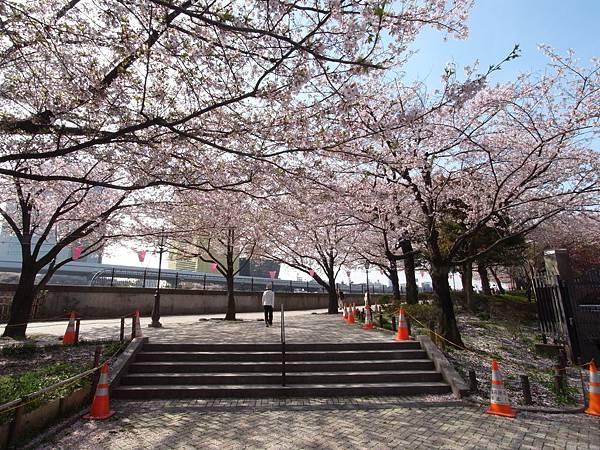 日本東京都隅田川散策 (5)