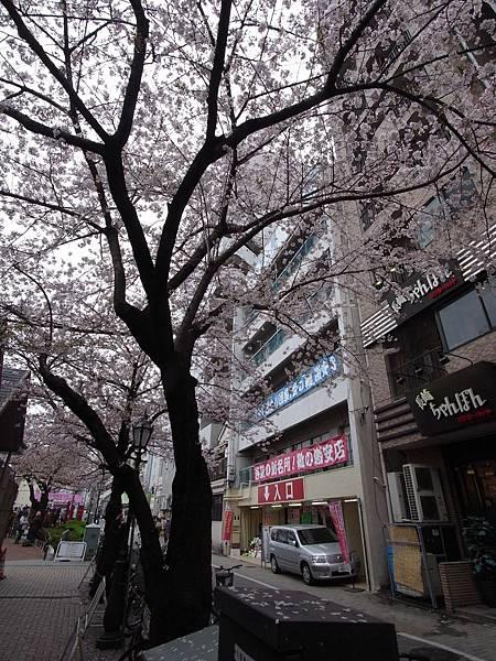 日本東京都隅田川散策 (8)