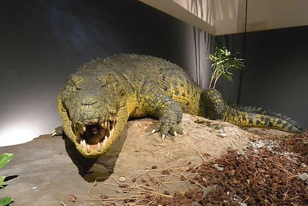 亞亞的白堊紀恐龍見面會 (4).JPG