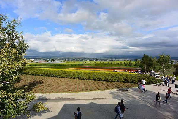日本北海道空知郡ファーム富田 (15).JPG