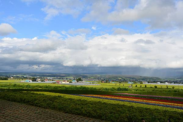 日本北海道空知郡ファーム富田 (16).JPG