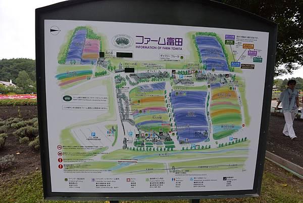 日本北海道空知郡ファーム富田 (22).JPG