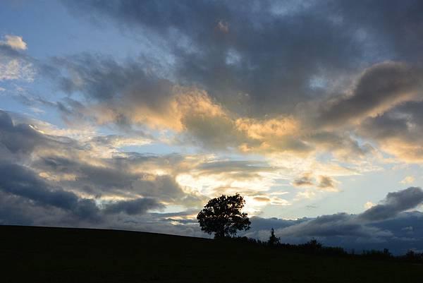 日本北海道美瑛町親子の木+北西の丘展望公園+マイルドセブンの丘 (1).JPG