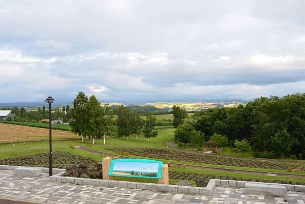 日本北海道美瑛町親子の木+北西の丘展望公園+マイルドセブンの丘 (2).JPG
