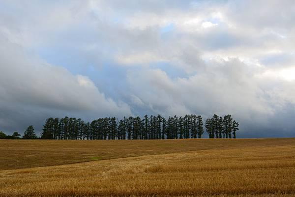 日本北海道美瑛町親子の木+北西の丘展望公園+マイルドセブンの丘 (11).JPG