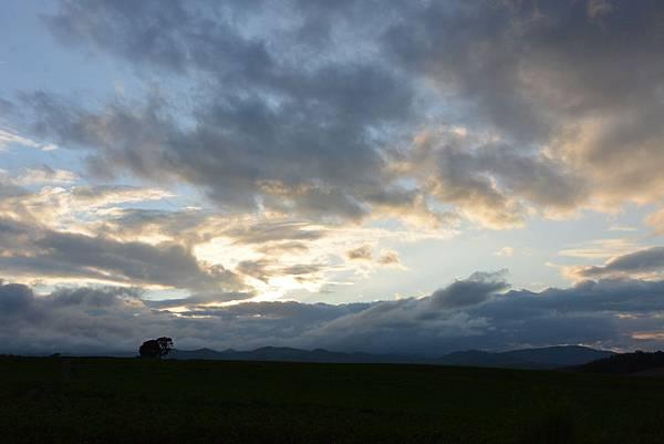 日本北海道美瑛町親子の木+北西の丘展望公園+マイルドセブンの丘 (17).JPG