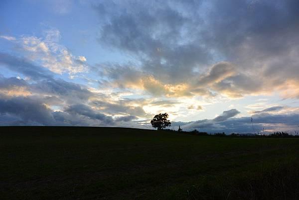 日本北海道美瑛町親子の木+北西の丘展望公園+マイルドセブンの丘 (18).JPG