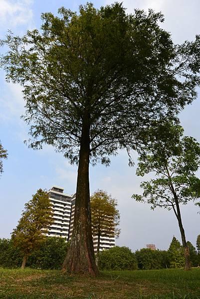 亞亞的野餐約會《大溪埔頂公園》 (24).JPG