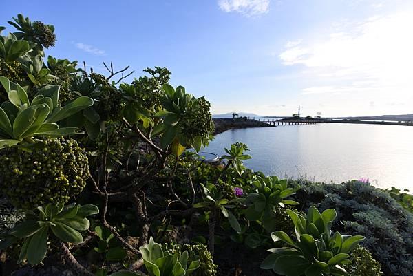 日本沖縄県シェラトン沖縄サンマリーナリゾート:サンマリーナビーチ (86).JPG
