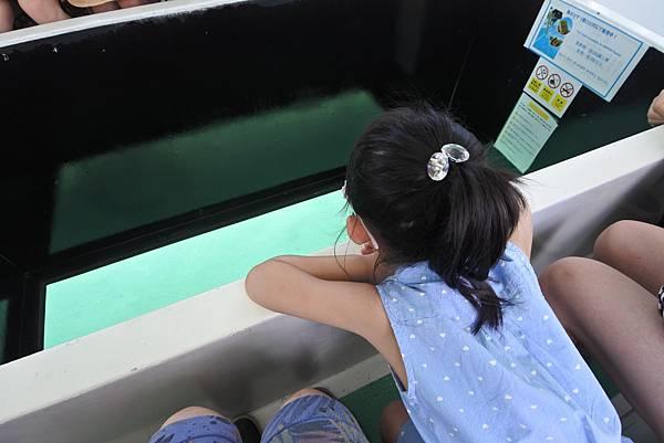 日本沖縄県ブセナ海中公園:ガラス底ボート (4).JPG