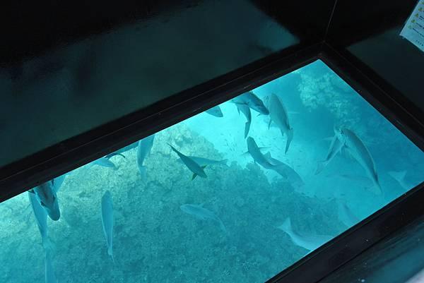日本沖縄県ブセナ海中公園:ガラス底ボート (7).JPG