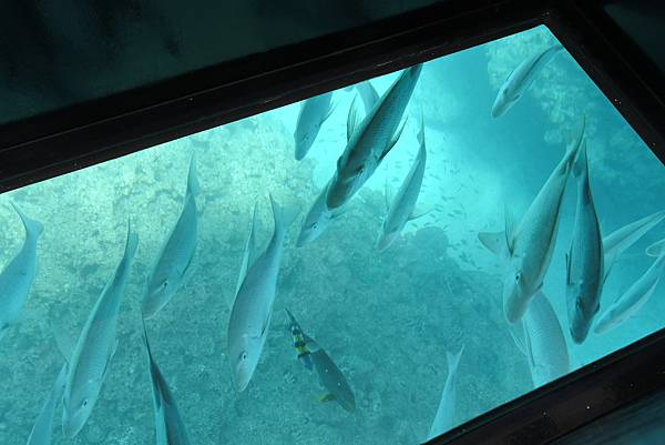 日本沖縄県ブセナ海中公園:ガラス底ボート (8).JPG
