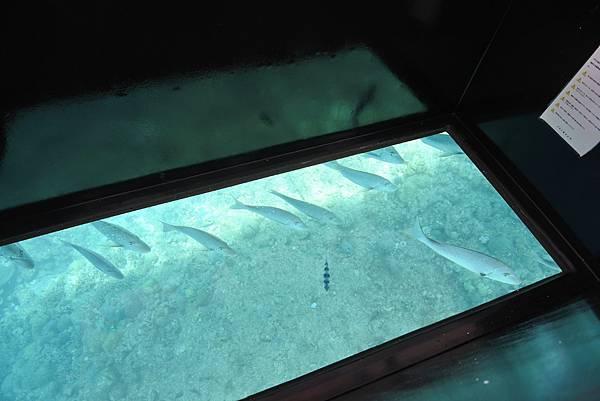 日本沖縄県ブセナ海中公園:ガラス底ボート (9).JPG
