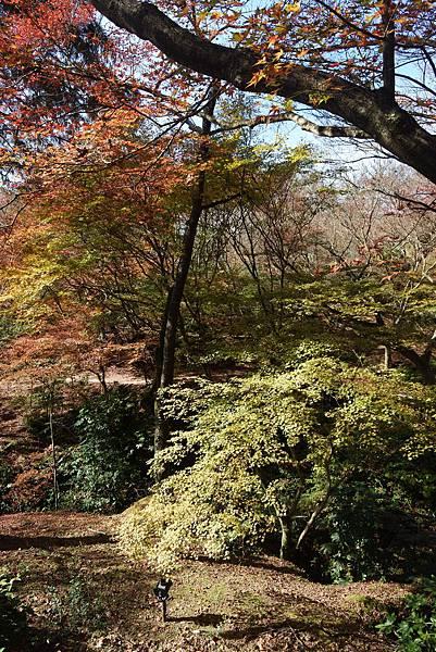 日本佐賀県御船山楽園 (6).JPG