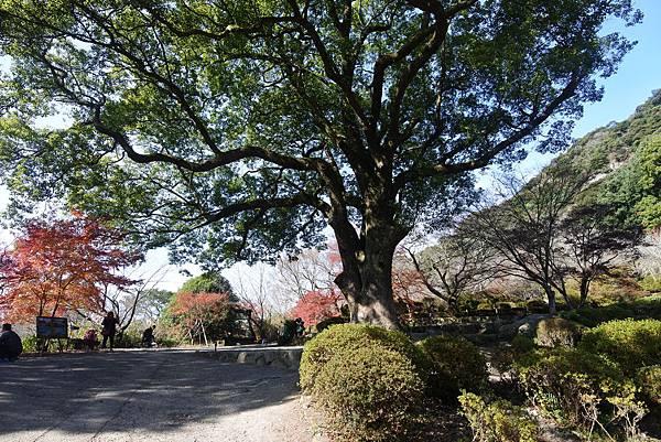 日本佐賀県御船山楽園 (18).JPG