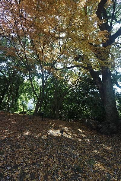 日本佐賀県御船山楽園 (24).JPG