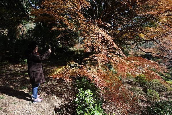 日本佐賀県御船山楽園 (25).JPG