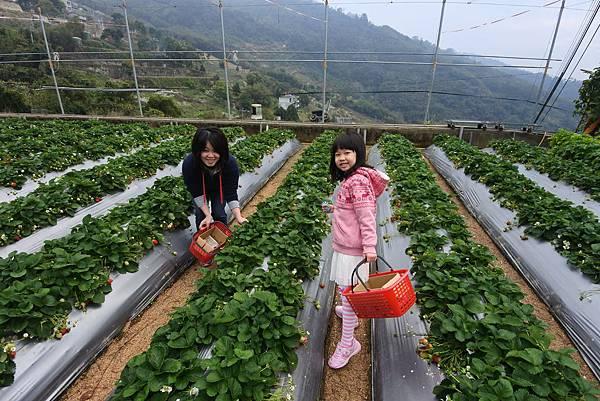 亞亞的馬拉邦草莓 (1).JPG