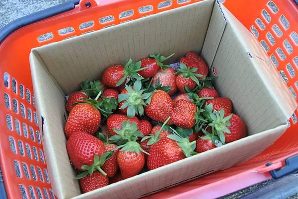 亞亞的馬拉邦草莓 (8).JPG